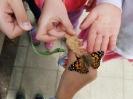Schmetterlinge 2b